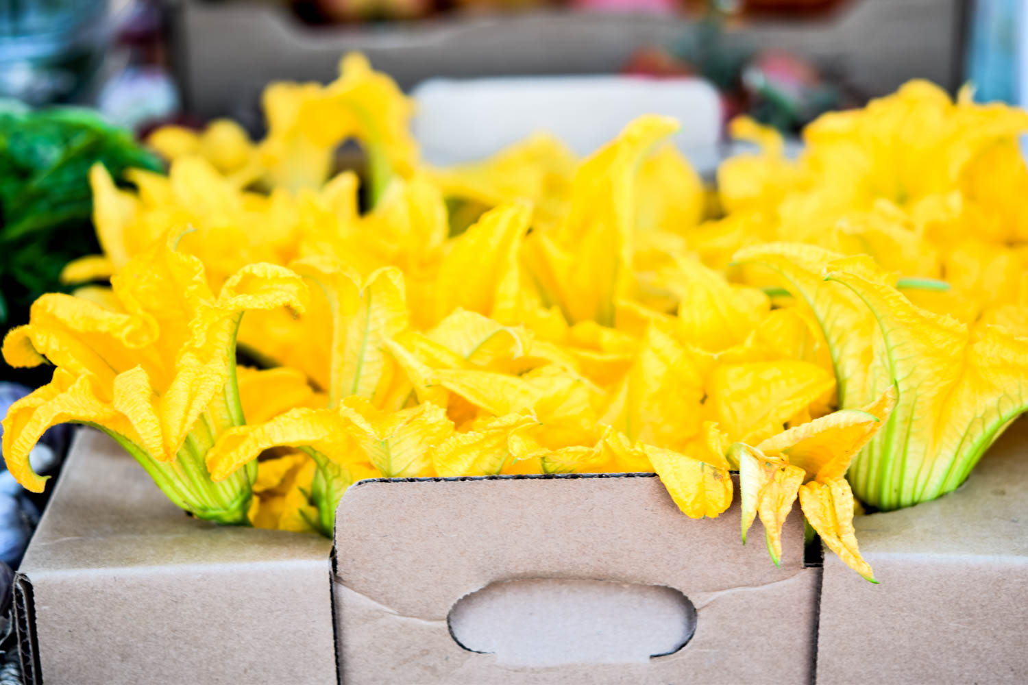 5 things I learned from joining a CSA this summer, squash blossoms, CSA Share